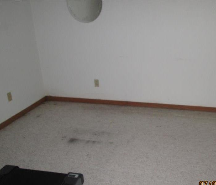 Carpet Mold in Jackson Township